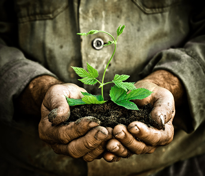Man hands holding a green young plant
